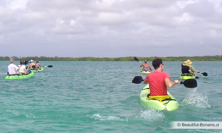 Kayaking at Mangrove wood Bonaire