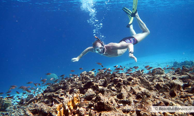 Snorkeling at Bonaire