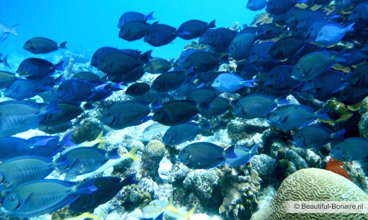 Group of fishes at coral reef Bonaire